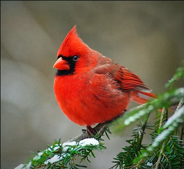 Christmas For The Birds Dwellings The Heart Of Your Home