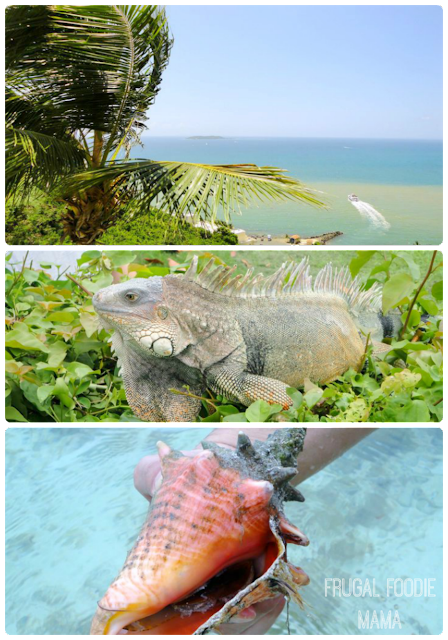 Iguanas, palm trees, and tropical sea life await you on Palomino Island in Puerto Rico
