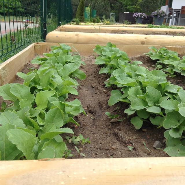 warzywa w skrzyniach