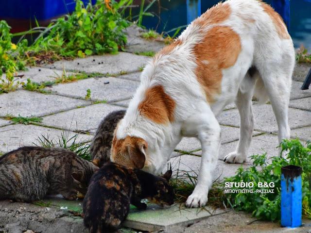 Η φωτογραφια της ημέρας: Οι γάτες και οι σκύλοι δεν είναι πάντα εχθροί