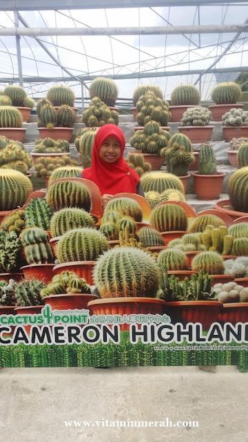 percutian bajet cameron highlands