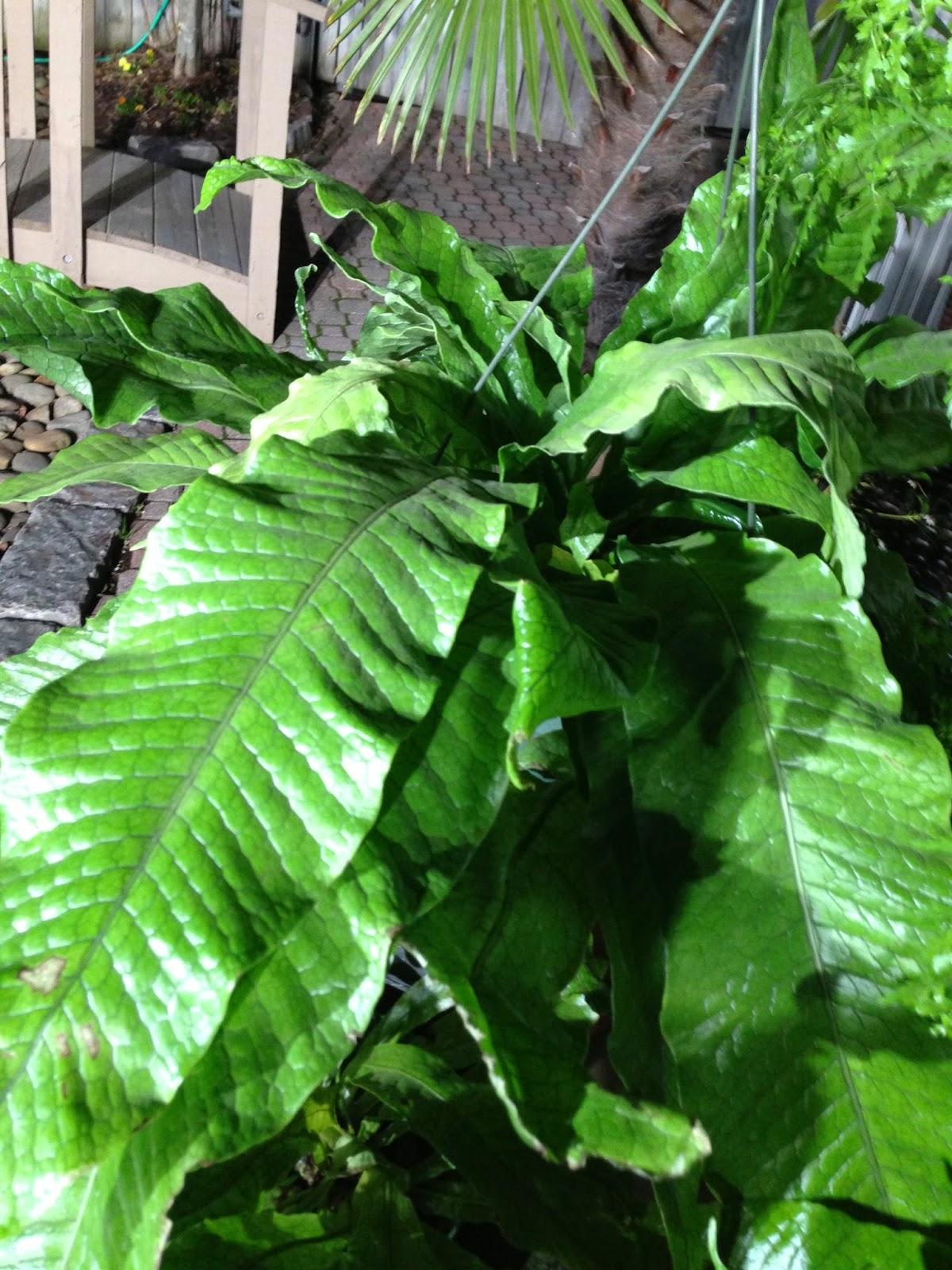 Chris H Olsen Online Blog Delicate Indoor Ferns That Are