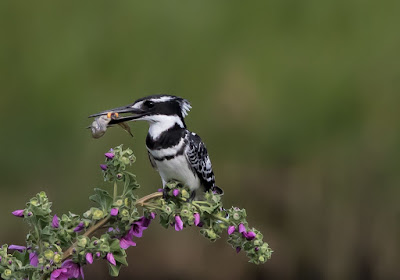 Flexible Canon EOS / Photography Private Training Offering = Bird / Wildlife Photography