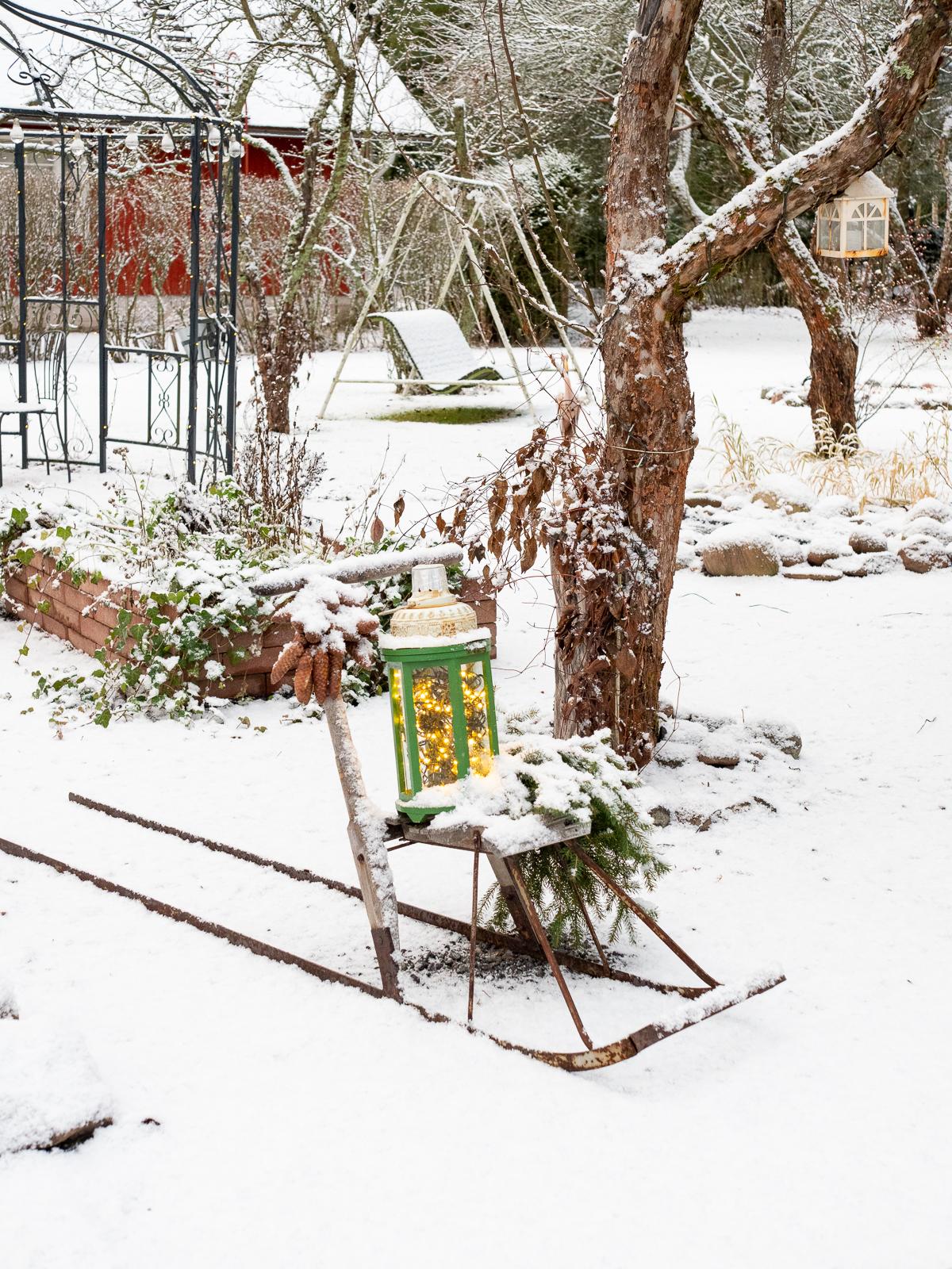 talvinen asetelma puutarhaan