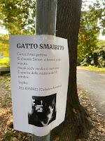 GATTO SMARRITO – Cerco il mio gattino. Si chiama Simon: è bianco, grigio, minuto.