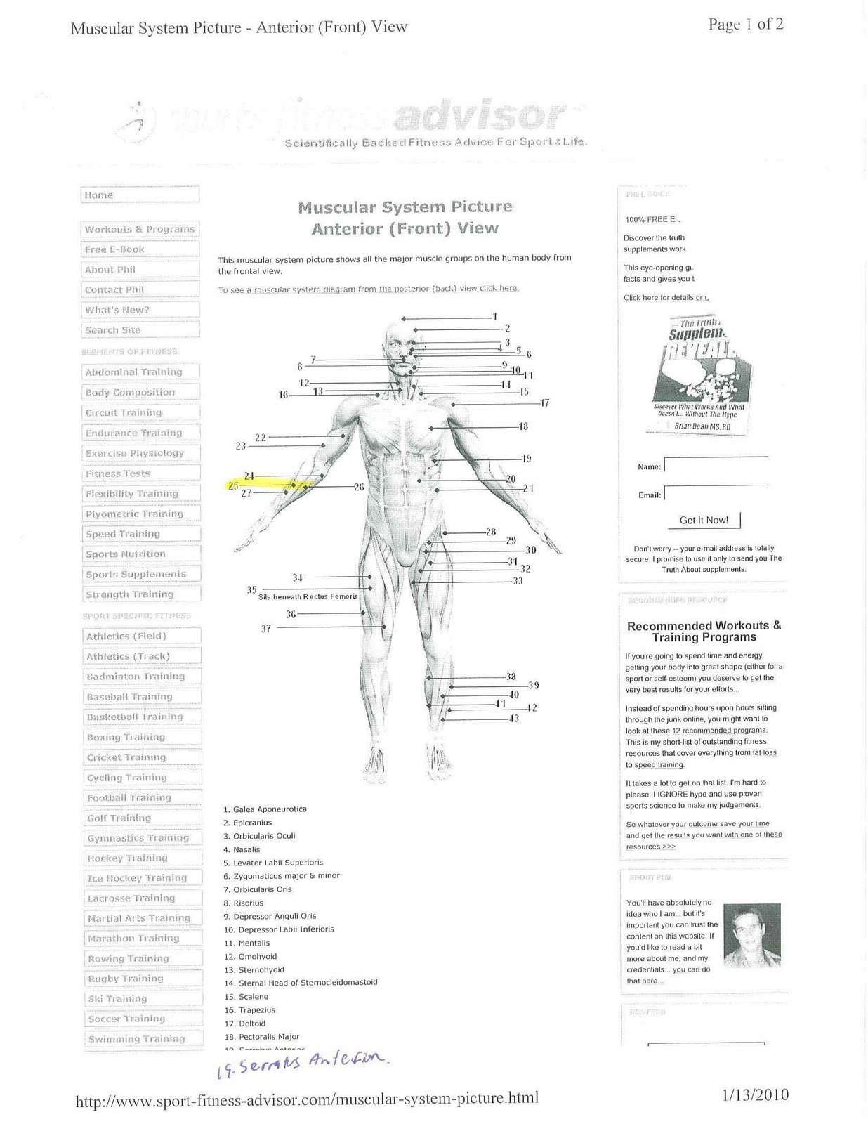 Muscular System Diagram X Mike