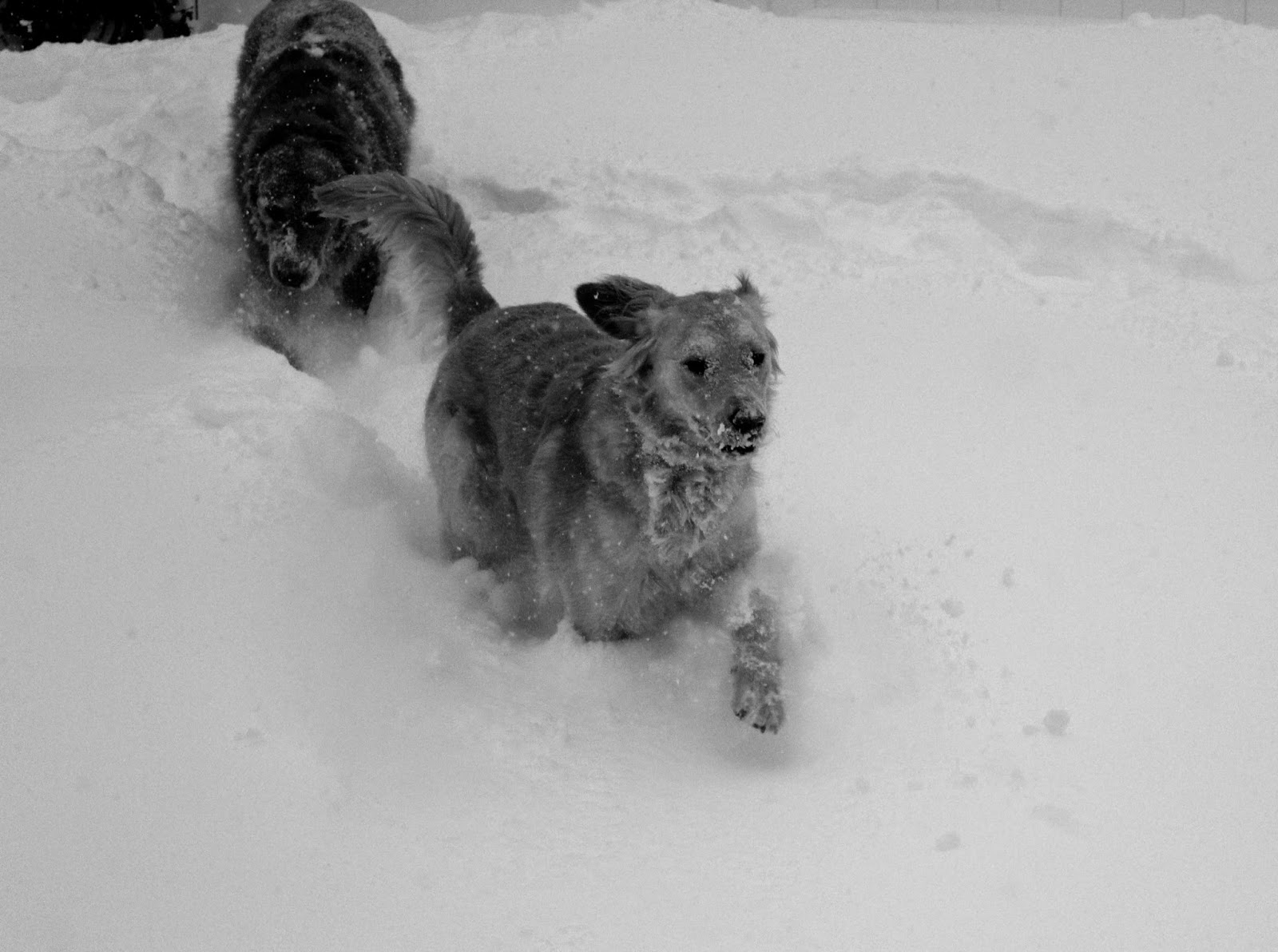 dogs playing tag in snow