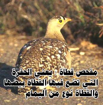(صورة) 57338alsh3er.jpg