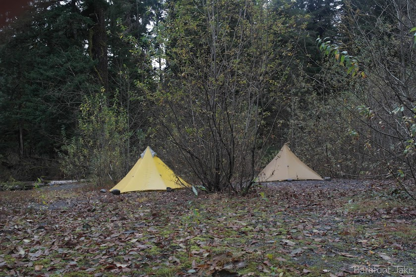 camping quinault rainforest