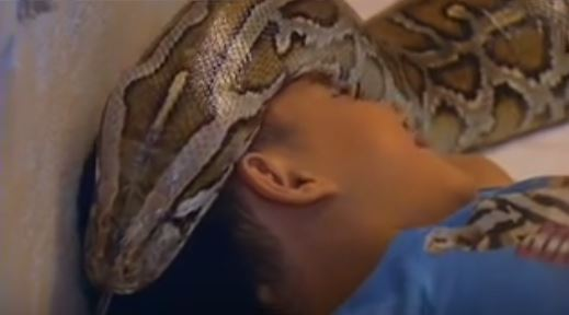 This Kid Has Been Sleeping With A Snake Since He Was Little. What Happened After 11 Years Will Definitely Shock You!