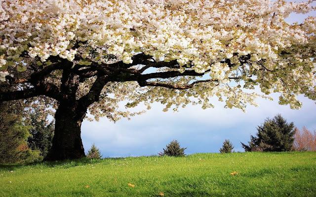 Spring-Wallpaper-HD-Download