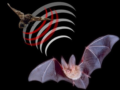 What are bats?