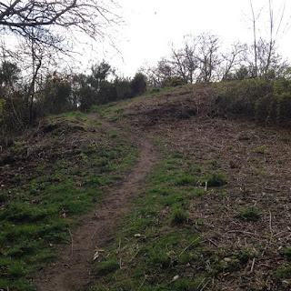 Bracken cleared on approach to the summit of Reres Hill April 2016