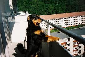 cães em condomínio