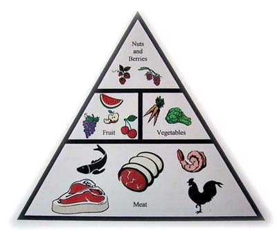 The Primal Food Pyramid