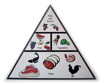 The Primal Food Pyramid