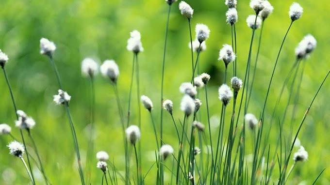 SỐNG THIỀN - Hoa cỏ nhỏ: Nâng niu cái tầm thường nhất, sẽ thấy cái phi thường nhất