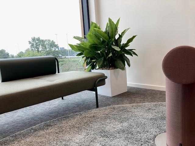 Verhuur planten voor events feesten kantoren in Limburg Brussel Gent