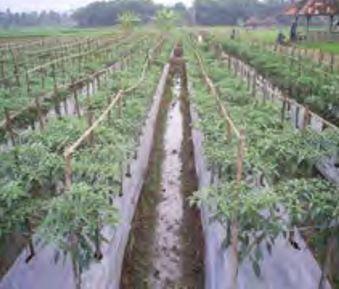 Perlu anda ketahui bahwa jenis-jenis mulsa dalam pertanian dibedakan menjadi 2 macam, yaitu mulsa organik dan mulsa anorganik. Mulsa organik berasal dari tumbuh tumbuhan,sedangkan mulsa anorganik berasal dari bahan sintetis berupa plastik. Mulsa adalah bahan pahan organik maupun anorganik yang digunakan sebagai penutup tanah.