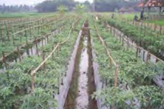 Jenis-Jenis Mulsa Dan Manfaat Mulsa Dalam Bidang Pertanian