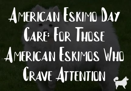 American Eskimo Day Care: For Those American Eskimos Who Crave Attention