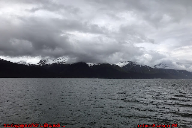 Kenai Fjords National Park Cruise