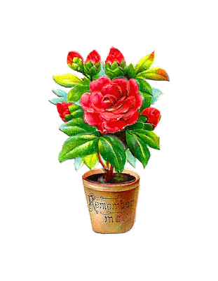 Flower Pot hd wallpaper images