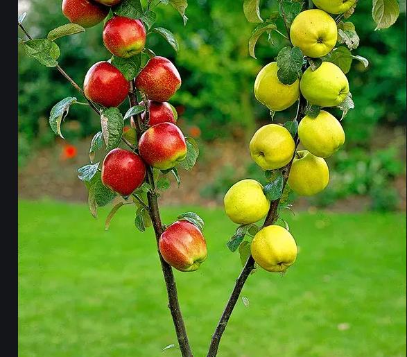 Prevenzione delle malattie negli alberi da frutto