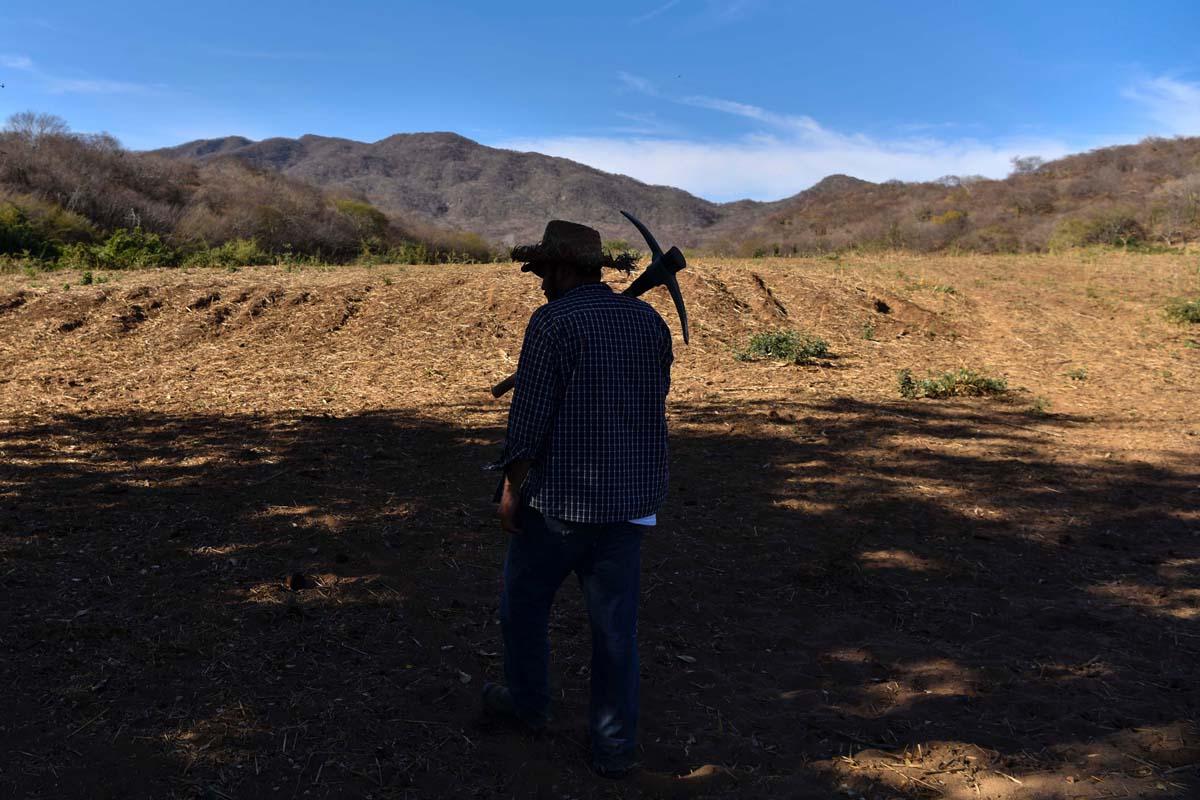 Encuentran 22 cuerpos en fosas clandestinas de Tecomán, Colima