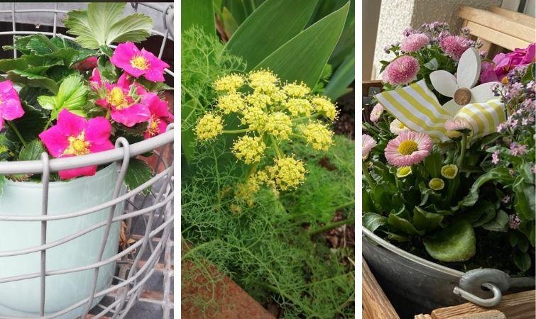 Blumenschalen für den Frühling