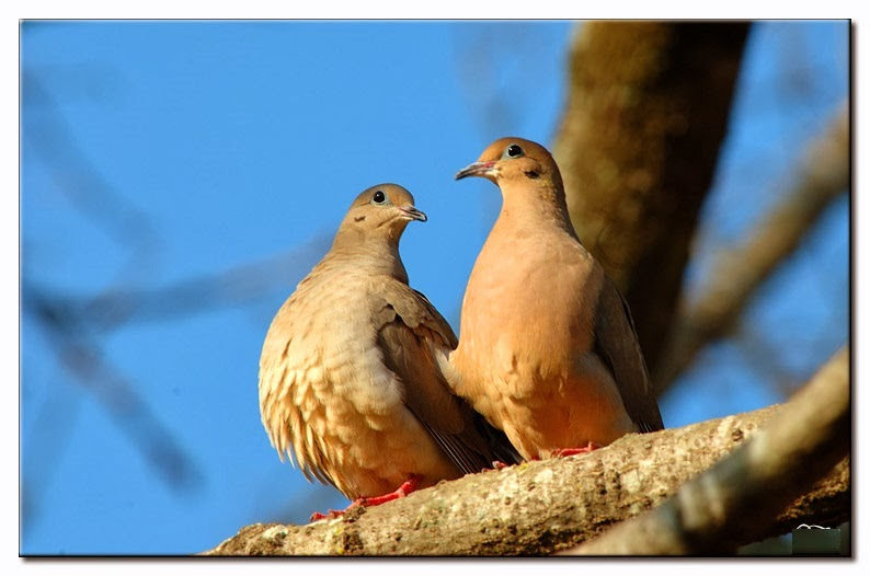 Any One 1 6 Jaeger Birds Hd Wallpapers: Any One 1-6: Dove HD Wallpapers
