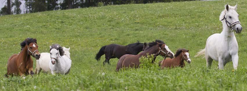 Farrier / Horse Industry Statistics