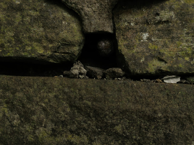 Snail between stones of a wall. August 22nd 2021