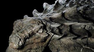 Βρέθηκε «ζωντανό» απολίθωμα δεινοσαύρου στον Καναδά. Δείτε πώς ήταν ακριβώς ο εντυπωσιακός Νοντόσαυρος, που έζησε πριν από 110 εκατ. χρόνια