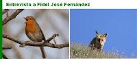 http://juanpuchefernandez.blogspot.com/2016/04/entrevista-al-dr-fidel-jose-fernandez.html