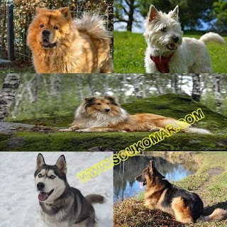 سُلالات كلاب