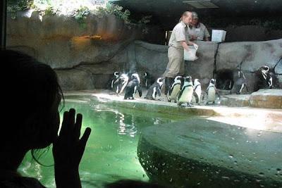 Riverbanks zoo coupon code