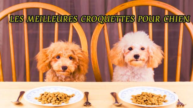 meilleures croquettes chien, meilleur croquette pour chien, meilleur nourriture pour chien, les meilleures croquettes pour chien, meilleur marque de croquette pour chien, tableau comparatif croquettes chien, classement croquettes chiens, nourriture maison chien, gramme croquette chiot,alimentation pour un chiot, meilleure nourriture chiot,croquettes chien,