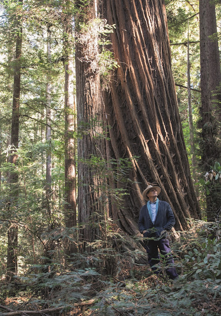 Monty Don amongst the redwoods in California