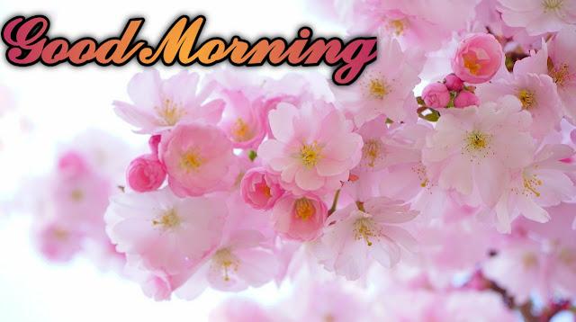 Romantic good morning images pics free for WhatsApp status