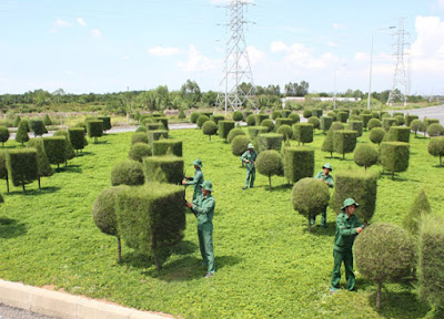tìm kiếm khách hàng cho dịch vụ chăm sóc cây cảnh
