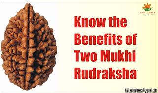 Know the Benefits of Two Mukhi Rudraksha