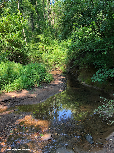 Gentle Creek running through Ridley Creek State Park.