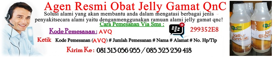 Distributor Jelly Gamat QnC