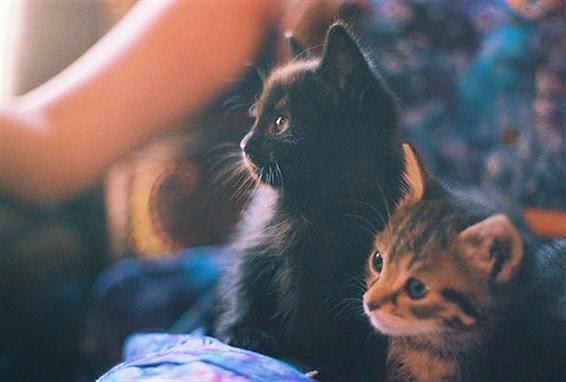 Kucing hitam pembawa keberuntungan