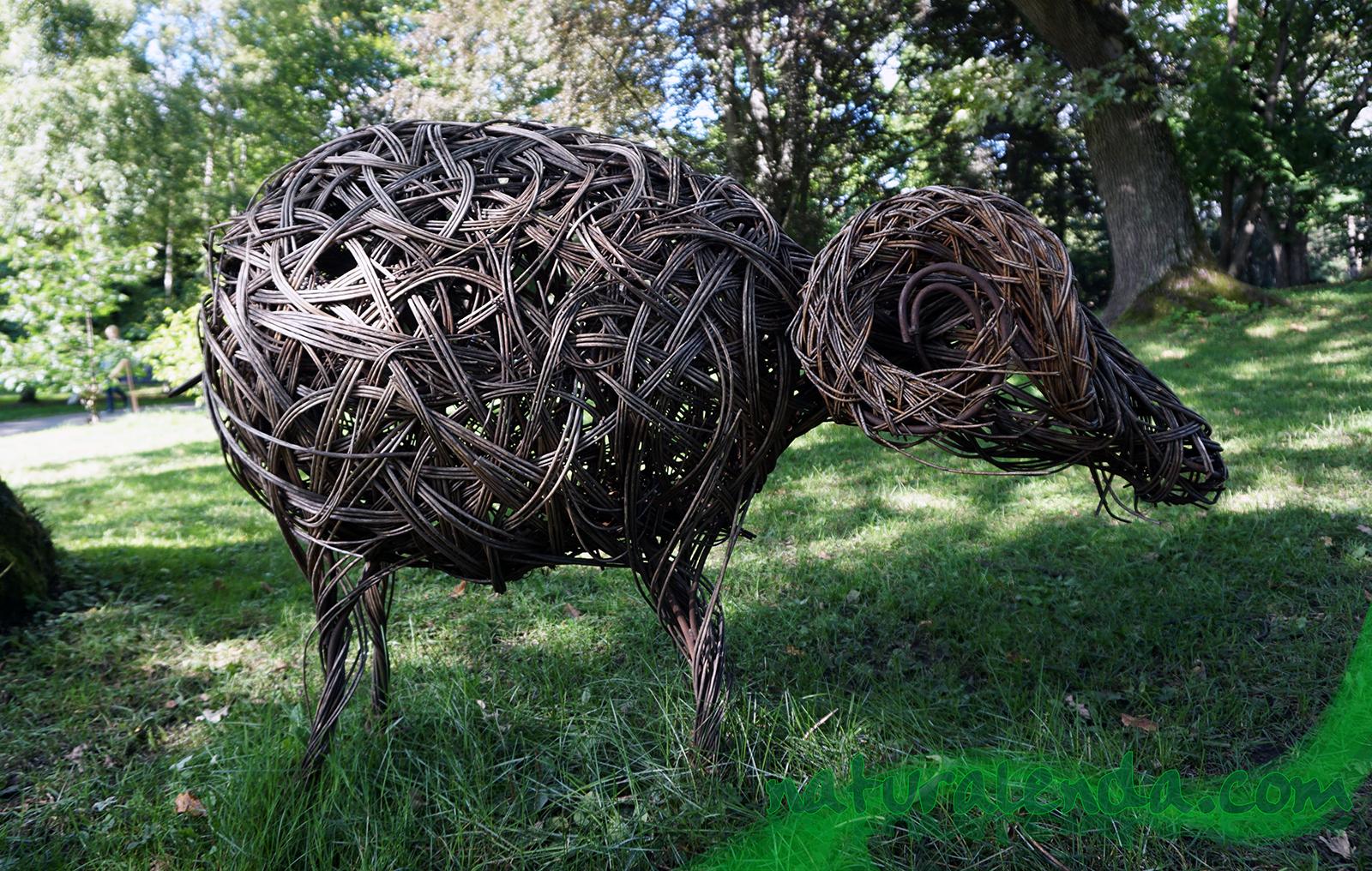 macho de la oveja de tom hare