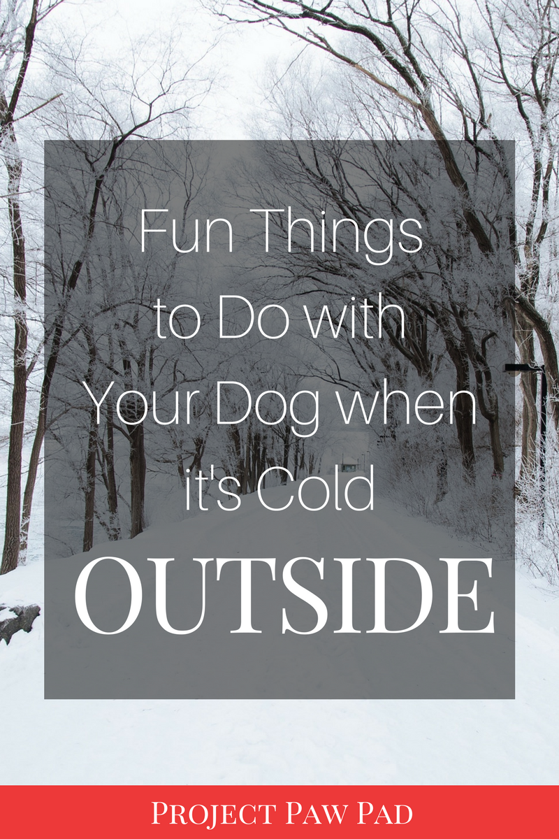 I hate the cold and I'm so ready for some sunshine and warmer weather. But this list of things to do with my dogs when it's cold outside saves me every single winter.