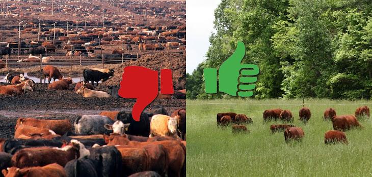 vegánstvo nie je riešenie