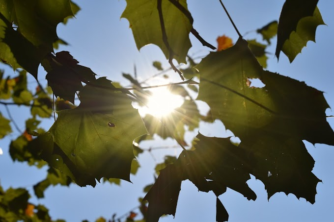 Scientists unravel mystery of photosynthesis