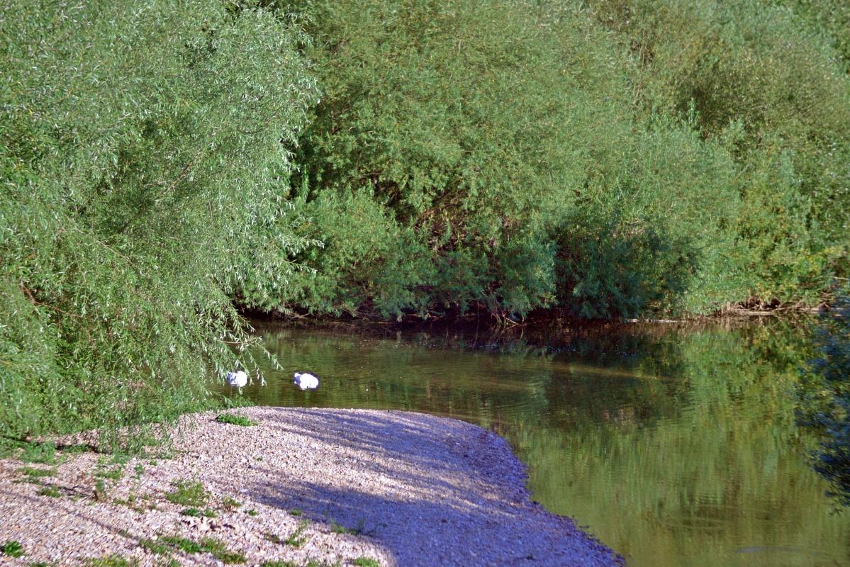 Fast kein Wasser im Neckar